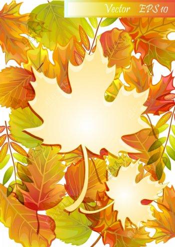 精美秋季枫叶