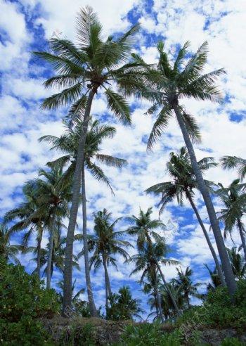 海边沙滩海滩悠闲度假椰树天空晴空蓝天