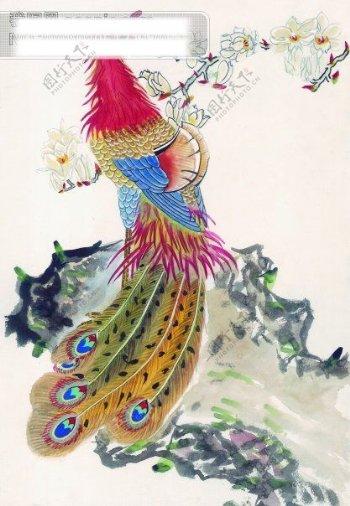 中国吉祥鸟孔雀
