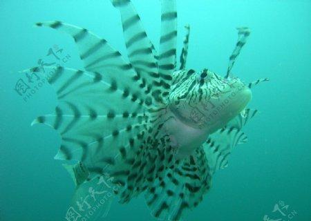 水中生物图片
