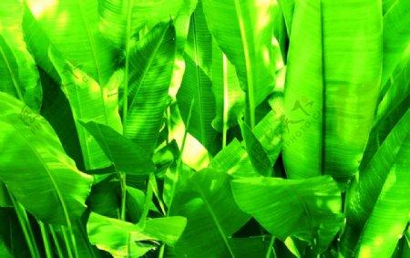 绿色植物清新生态环保生物世界摄影图库图片
