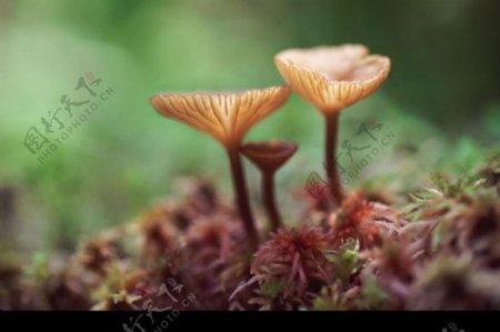 自然花草0087
