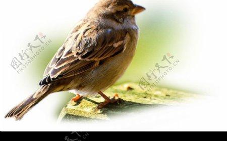 鸟趣横生0023