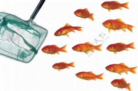 鱼网与金鱼素材图片