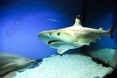 海底深处的鲨鱼图片