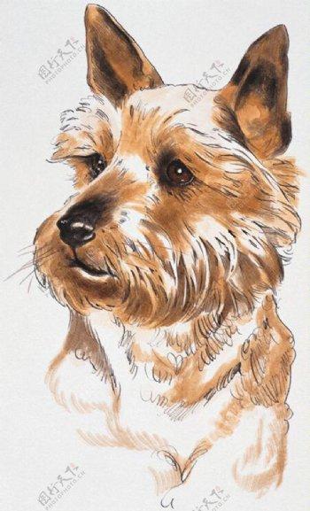 狗家禽家畜动物插图10