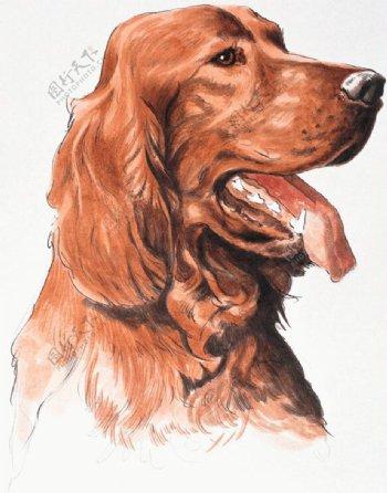 狗家禽家畜动物插图15
