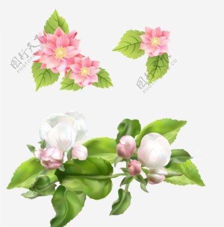 海棠花花朵