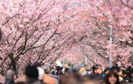 游人如织的樱花园