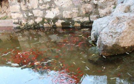 一群小鱼儿