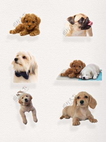 家养小可爱毛茸茸的狗狗写实卖萌装饰图案