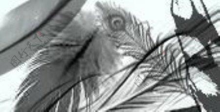 26种漂亮羽毛