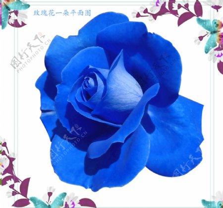 一朵蓝玫瑰花朵图片素材