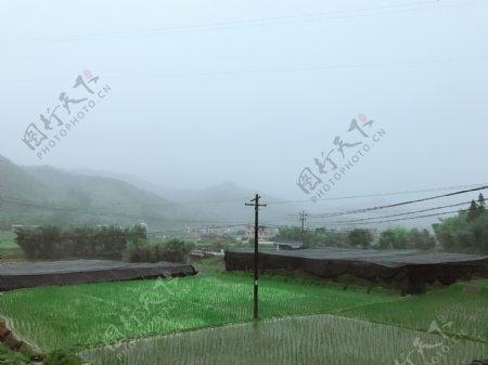 雨水灌溉着田野万物生长