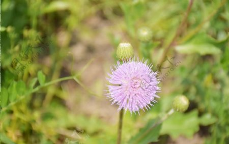 紫花小花野花野草