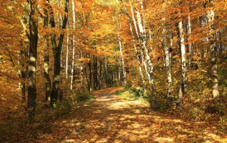 秋季i树林