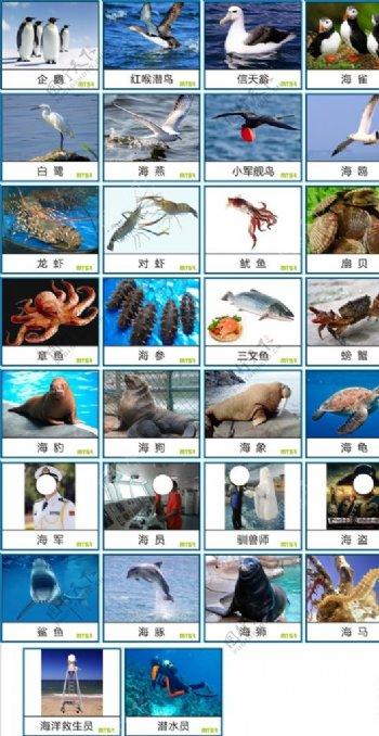 早教中心海洋动物卡片