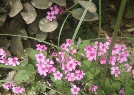野花小花朵