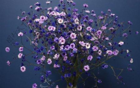 漂亮的满天星鲜花