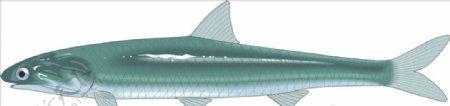 凤尾鱼矢量海洋鱼CDR