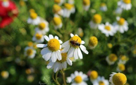 小花开花的草