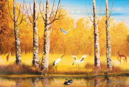 大白杨杨树林白桦树秋季黄色树叶