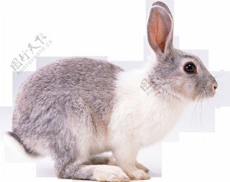可爱动物兔子图案