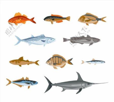 彩绘逼真鱼类图片