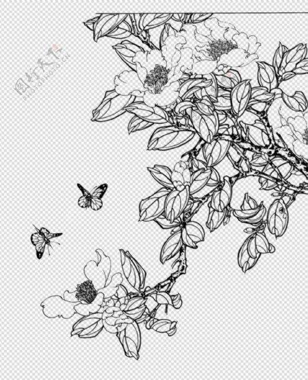 免扣图山茶花蝴蝶手绘图图片