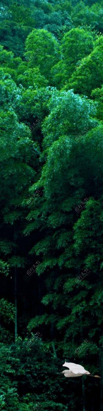 森林白鹭密林绿意隐图片