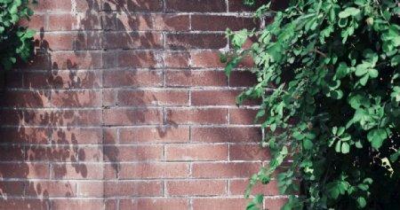 绿荫下的红砖墙图片
