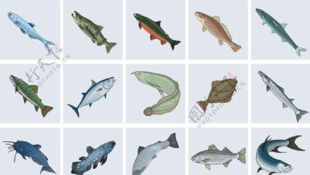 海鱼总汇带鱼活鱼鱼类图片