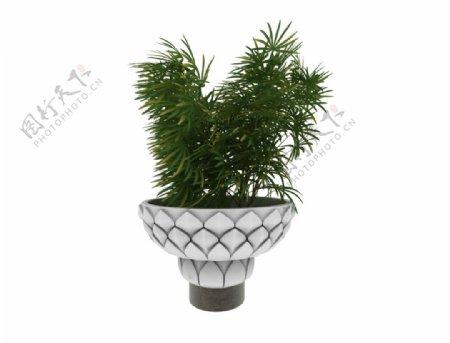 莲花台植物3d模型图片