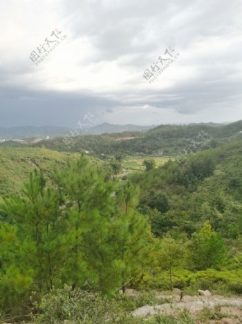 南方松树林景色图片
