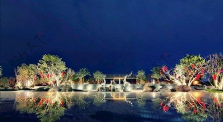 花园夜间图片