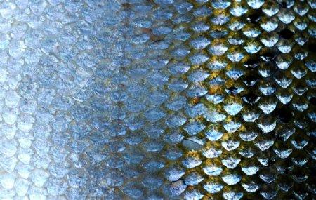 鱼鳞鱼片美食海报背景素材图片