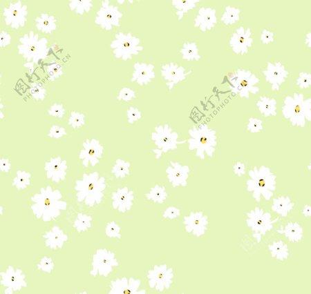 豹点小雏菊图片