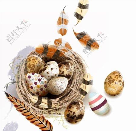 鸟窝鸟蛋和羽毛图片