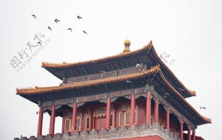城楼上的鸽子图片