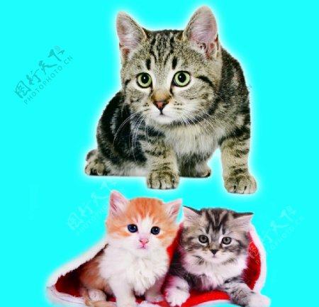 小猫咪猫猫仔图片