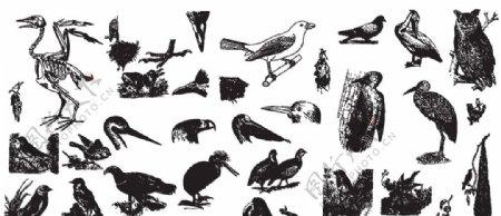 线描小鸟图片