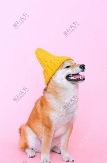 小狗艺术照图片