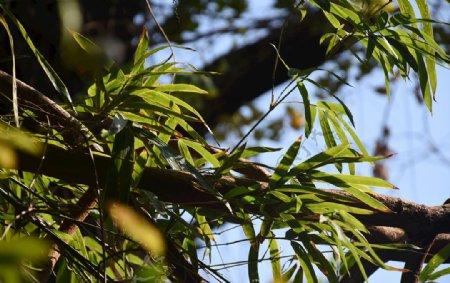 阳光下的竹子图片