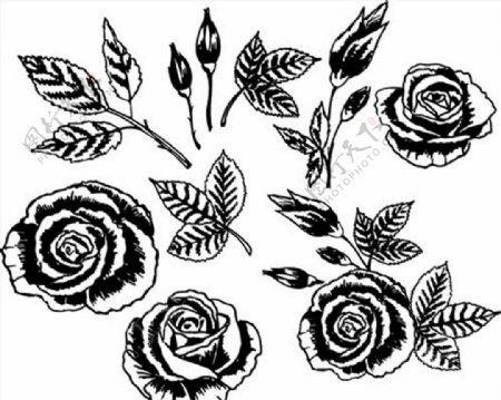 黑白手绘风花朵图片
