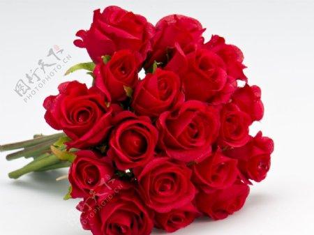 红色玫瑰花束近景拍摄素材图片
