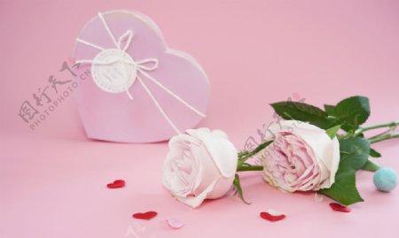粉色玫瑰花拍摄素材图片