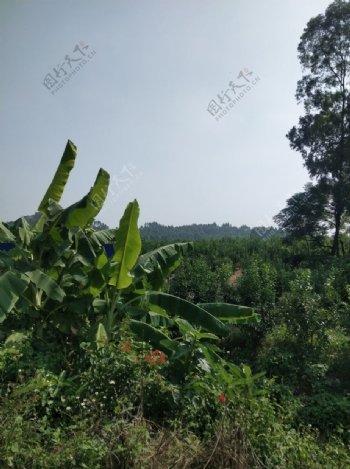 农场环境图片