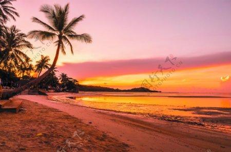 夕阳下的海岸线椰树装饰背景摄影图片