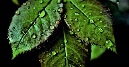 树叶摄影图片
