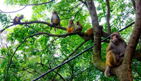 树上猴子图片
